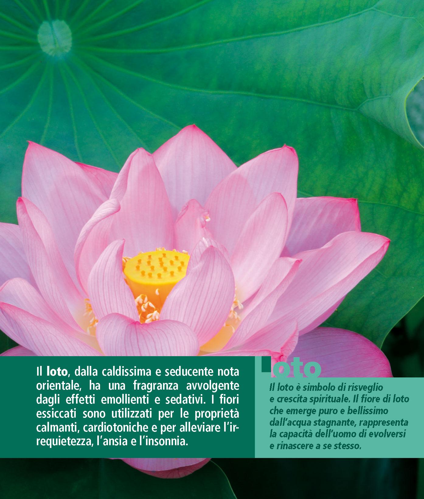 Calendario FioriEssenzeParole 2016 Luglio retro pagina